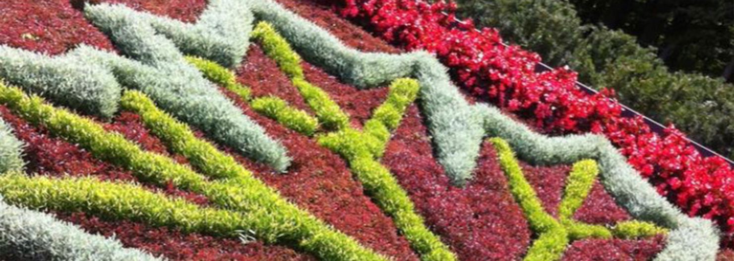 The mental health benefits of Horticultural Therapy